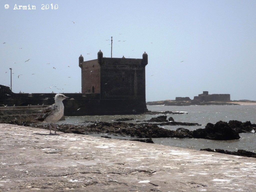 Maroc2010_025.JPG.57b0982ab79cc56e3a6620742df7b2bd.JPG